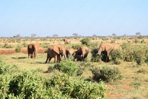 Read more about the article The Safari Adventures in Kenya