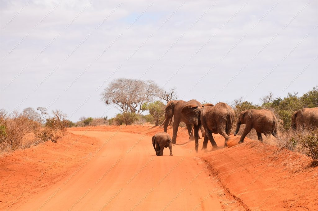 You are currently viewing The Red Elephants of Tsavo National Park