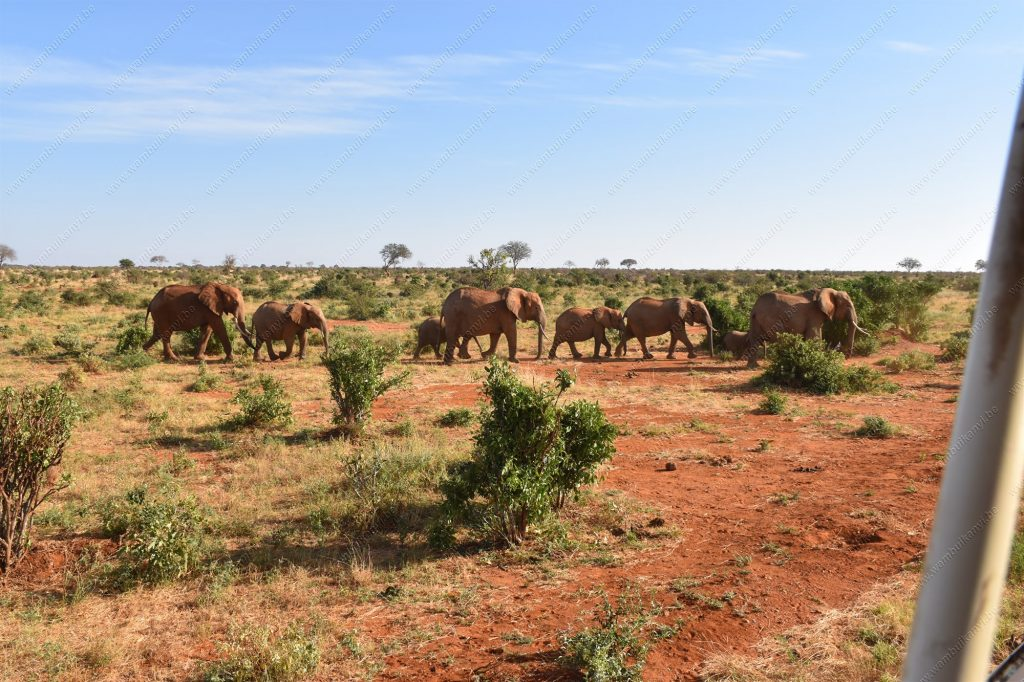 Tsavo National Park in Kenya