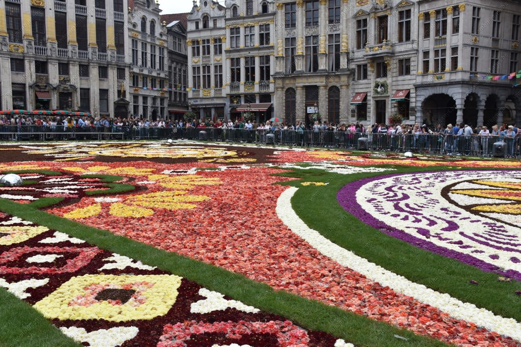 The Flower Carpet in Brussels