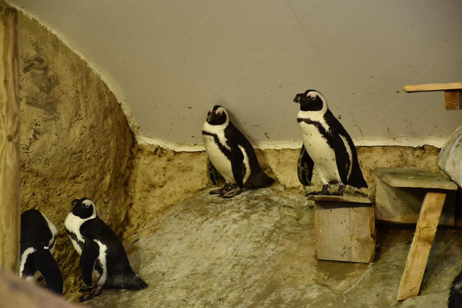 Penguins in Nausicaa National Sea Centre