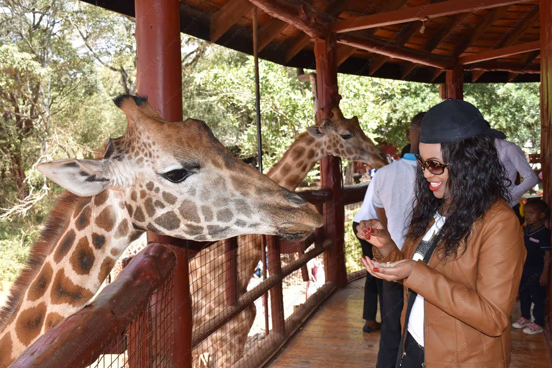 Read more about the article The Giraffe Centre, Nairobi Kenya