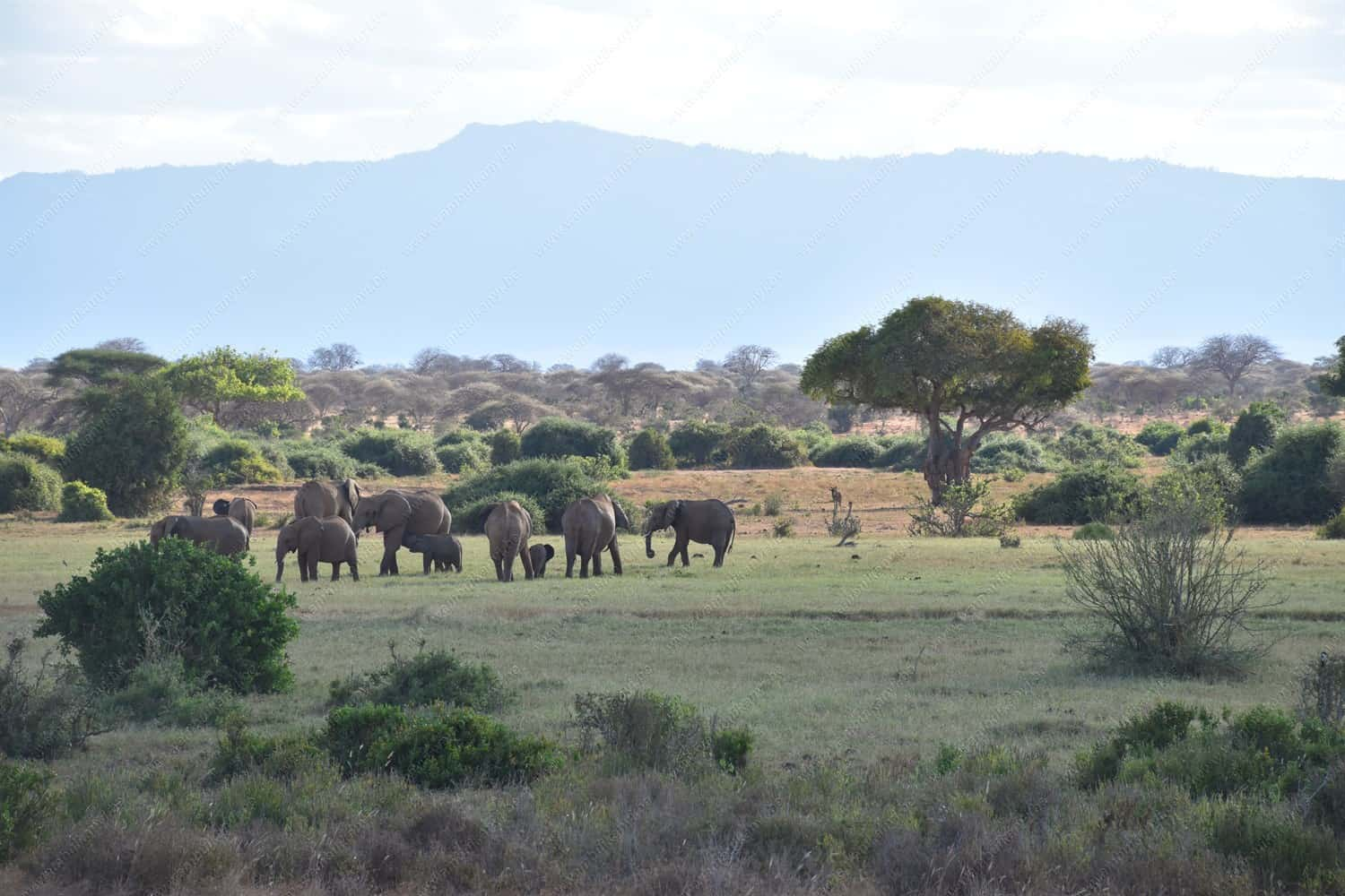 Read more about the article The Packing List For An African Safari